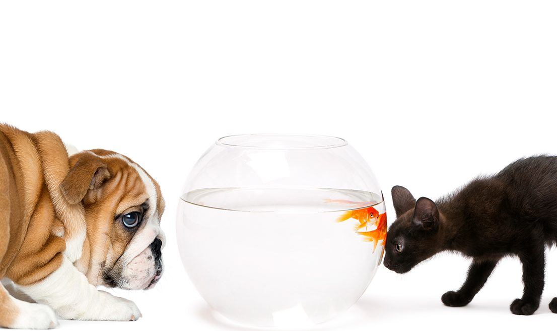 Vamos brincar de quê? #1 – Dog, Cat and Fish
